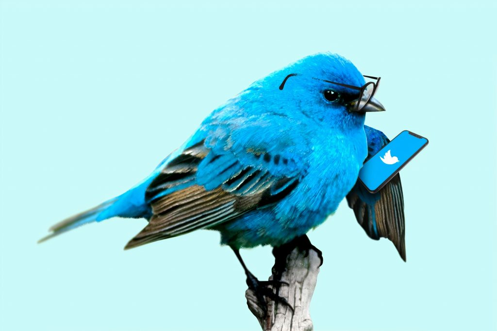 A blue bird wearing glasses holding a phone which is loading twitter
